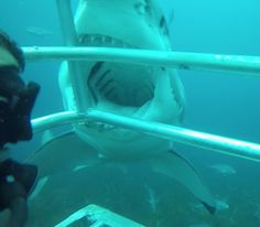 """""""open wide"""" by TravelPod blogger glesme from the entry """"Glenn's gonna need a bigger boat!"""" on Thursday, January 29, 2015 in Port Lincoln, Australia"""