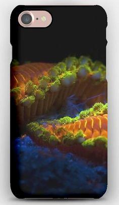 iPhone 7 Case Caterpillar, Macro, Stones
