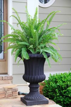 12 Common House Plants That Filter Your Air All Day : Kimberly Fern Queen plants add so much class and good health to the household! Front Door Planters, Urn Planters, Front Porch Plants, Front Porch Flowers, Container Plants, Container Gardening, Succulent Containers, Container Flowers, Porch Urns