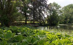 Garden design for old monumental farm in Terwolde, Netherlands by Buro Harro (landscape architects).