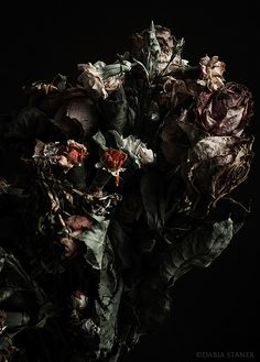 The beauty of decaying flowers. Nostalgic and poetic. Growth And Decay, Flower Aesthetic, Chiaroscuro, Natural Forms, Still Life Photography, Dried Flowers, Wilted Flowers, Macabre, Dark Art