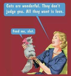 Cats....