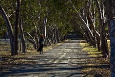 Barb Takes a Walk down a Shady Road by Tom Moyer Photography, via Flickr