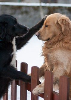These dogs who understand the true meaning of friendship. | 29 Dogs Who Will Make You Want To Be A Better Person