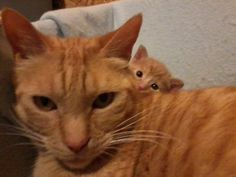 This has gotta be one of the cutest photobombs ever!