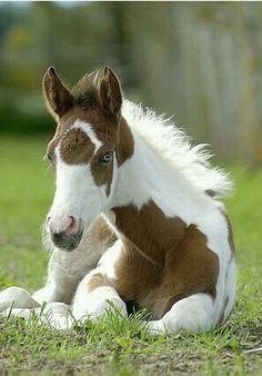 beautiful pony  <3