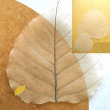Unique arriving 10 Pieces A-Class Natural  Leaf  Veining Organic Craft  Leaf Skeleton For DIY Home Decoration Peepul Bo-Tree Leaves 4 Sizes now at a discounted price US $6.99 with free delivery  you may see this kind of piece and more at the online site      Buy it now on this site >> http://bohogipsy.store/products/10-pieces-a-class-natural-leaf-veining-organic-craft-leaf-skeleton-for-diy-home-decoration-peepul-bo-tree-leaves-4-sizes/,  #BohoChic