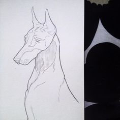 #doberman #pencil #illustration #draw #drawing #sketch #nz #newzealand