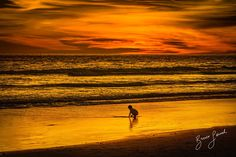 Red at Night... http://www.brucelevick.com/red-at-night/ I don't know what exactly this boy was looking or maybe just playing for but thanks for being a subject in one colorful sunset…  #Bengkulu, #Explore, #Exploreasia, #Exploreindonesia, #Indonesia, #Mysumatra, #Photography, #Sumatra, #Sunset, #Travel, #Wonderfulindonesia