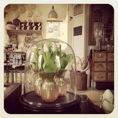 tulips in vintage vases under cloche