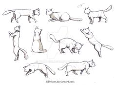 Cat reference by Kibbitzer on @DeviantArt