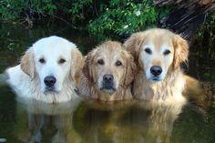 3 Amigos Bentley, Brie and Tyler