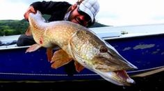 First off, the intro minute or so is one of the most genius things we've seen in a fly fishing film. We loved it. And then these pike! They're massive! Check out Black Bay Lodge for some Irish pike fishing action. Fishing Uk, Pike Fishing, Fishing Videos, Fishing Guide, Deep Sea Fishing, Fishing Girls, Vintage Fishing, Going Fishing, Best Fishing