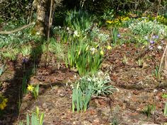 march 2015 in the Show Gardens