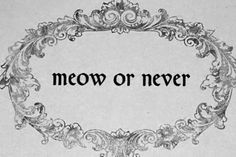 """Meow meow...the Raven only said, """"NEVER-MORE.""""  CATs Are Smart"""