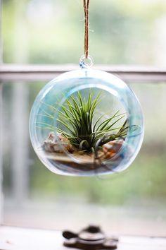 Beachy DIY Terrarium - Learn how to make a terrarium with this adorable summer craft idea.