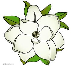 Louisiana State Flower - magnolia