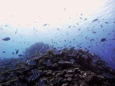 Miyakojima coral sea