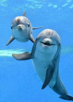 Delfines ♥