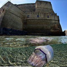 Napoli    Castel dell'ovo  Buongiorno amici partenopei 😊  lo avete mai visto da…