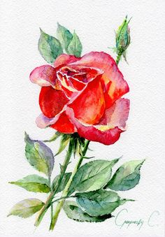 Rose Red Pink flowers Watercolor Original Painting from