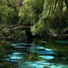 Fern Hammock Springs is in Juniper Springs Recreation Area in the Ocala National Forest, Florida.