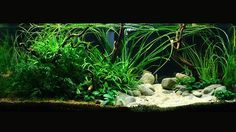 """""""Planted tanks"""" or """"Aquascaping""""? What would you usually call it? © Mirko Agasi"""