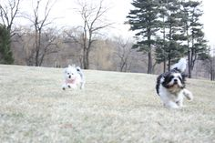Tucker and Gypsy out for a run!!