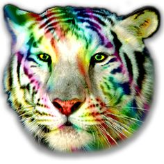 graphic white tiger shirt rainbow tiger by OriginalMindsTees