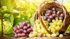Grape Recipes: Autumn food with a slightly sweet taste! Grape Recipes, Fall Recipes, Lucky Food, Green Grapes Nutrition, New Years Eve Food, Fruit Picture, Growing Grapes, Delicious Fruit, Dog Eating