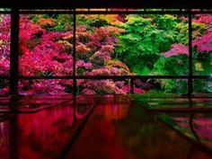 辺り一面が真っ赤に染まり秋の京都を彩る大人気の紅葉名所「瑠璃光院(るりこういん)」。京都屈指の絶景スポットでありますが、ここ「瑠璃光院」紅葉色に染まる秋だけでなく春も美しい景色を創り上げているのです!今回はそんな「瑠璃光院」で見ることができる、美しい新緑の世界をご紹介。 Japanese Landscape, Japanese Architecture, Beautiful Places In Japan, Cherry Blossom Japan, Traditional Japanese House, Autumn Scenery, Japan Photo, Colorful Trees, Great View