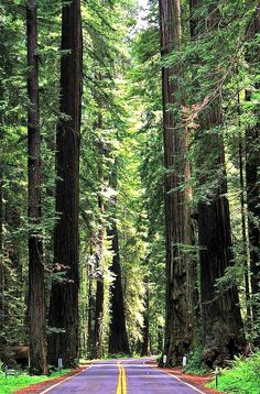 Bucket List - Road trip through Redwood National Park, California: http://www.ytravelblog.com/road-trips-planning-guide/