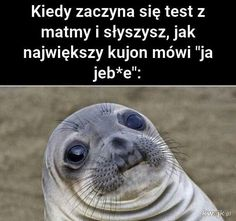 Very Funny Memes, Wtf Funny, Funny Cute, Funny Lyrics, Polish Memes, Funny Mems, Everything And Nothing, Funny Animals, Cute Animals