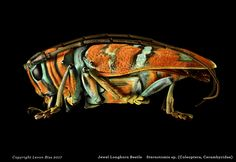 Jewel Longhorn Beetle Microsculpture by London-based photographer Levon Biss is a collection of insects shot through a macro lens tha. Pictures Of Insects, Insect Photos, Longhorn Beetle, Insect Photography, Micro Photography, Photography Backdrops, Amazing Photography, Portrait Photography, Beautiful Bugs
