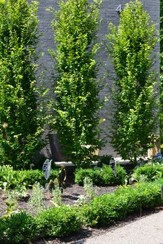 Ideas for backyard privacy trees pergolas Backyard Trees, Landscaping Trees, Privacy Landscaping, Backyard Pool Designs, Backyard Privacy, Backyard Fences, Diy Pergola, Pergola Kits, Pergola Ideas
