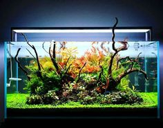 Aquarium Garden, Aquarium Landscape, Home Aquarium, Nature Aquarium, Aquarium Design, Aquarium Fish Tank, Planted Aquarium, Fish Tanks, Saltwater Tank