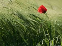 Resultado de imagem para national geographic flowers