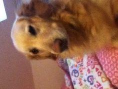 Lexy my dog