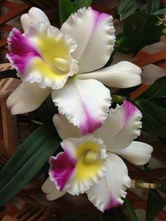 Delicate and Beautiful Orchids!
