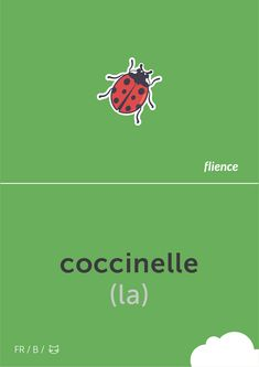 Coccinelle #flience #animal #insects #english #education #flashcard #language