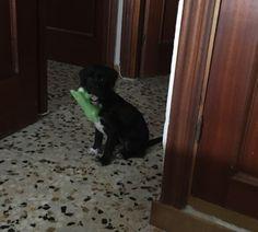 Adopta a Raisa ( Mestizo ) - #adopta #perros