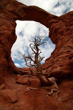 Arches NP Trees Utah By DBS utah utah utah utah utah utah