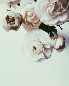 ranunculus blossoms, photographed by jade of endlessly enraptured