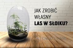 Ekosystem w słoiku – jak zrobić własny las w słoiku ? Diy And Crafts, Arts And Crafts, Hydroponics, Glass Jars, Garden Inspiration, Good To Know, Container Gardening, Terrarium, Flora
