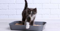 5 conseils pour apprendre la propreté à un chaton