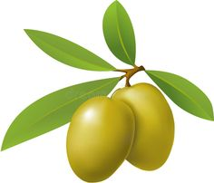 Oleuropein is the active ingredient found in green olives and olive leaf. are made from the fresh or dried leaves of the same plant species that produces olive fruit and olive oil. Sources Of Vitamin A, Olive Fruit, Flower Template, Plant Species, Side Effects, Superfoods, Olive Green, Natural Remedies, Health And Wellness
