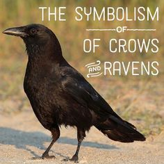 What Does It Mean When You See a Raven or Crow? Symbolism, Differences - Pinned by The Mystic's Emporium on Etsy