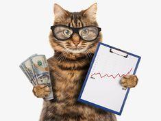 Kedi Sahipleri İçin Tasarruf İpuçları – Masrafları Düşürün!