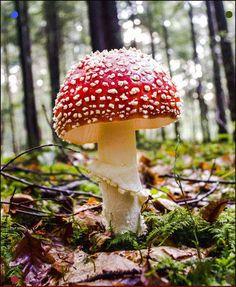"Self-Proclaimed ""Mushroom Hunter"" Captures Photos That Change The Way You See Fungus Mushroom Images, Mushroom Pictures, Mushroom Art, Mushroom Fungi, Mushroom Hunting, Images Of Mushrooms, Tiny Mushroom, Mushroom Lights, Poisonous Mushrooms"