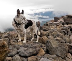 Info -  The 10 Best Outdoor Dog Breeds